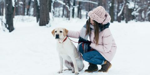 Should Your Dog Play in the Snow?, Hilton, New York