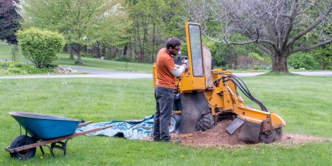 What Every Homeowner Should Know About Stump Grinding, Gates, New York