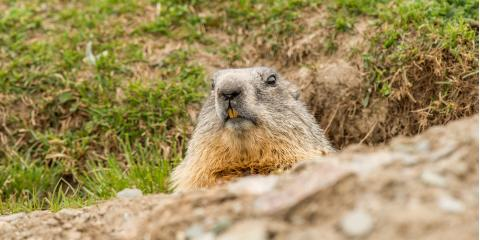 4 Ways to Protect Your Gardens From Woodchucks, New Milford, Connecticut