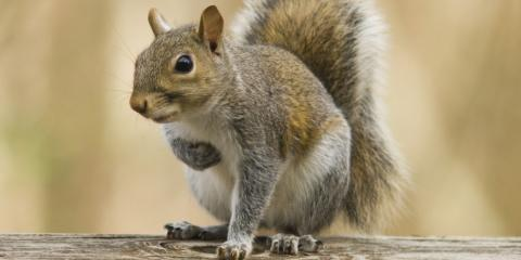 A Few Do's & Don'ts of Squirrel Removal, New Milford, Connecticut