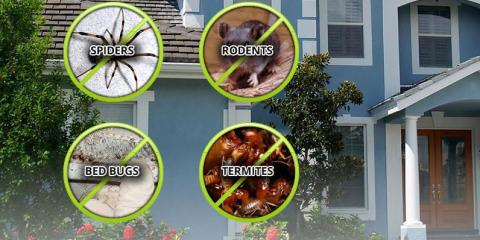 New Hyde Park's Pest Control Experts Share 4 Questions You Should Ask a Pest Control Company, North Hempstead, New York