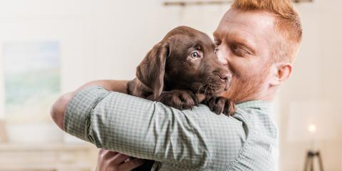 4 FAQ About Puppy Care, Manhattan, New York
