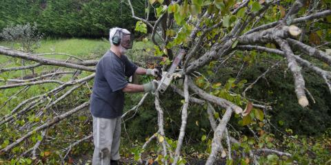 5 Things to Look for When Assessing Storm Tree Damage, Manhattan, New York