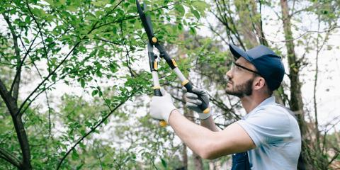 4 FAQ About Tree Pruning, ,