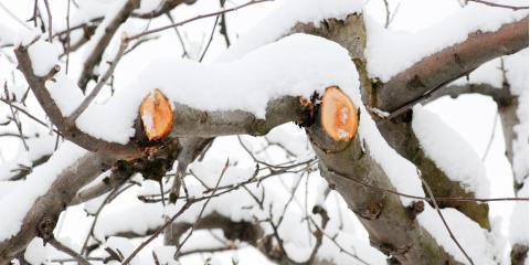 5 Reasons to Schedule Tree Pruning in Winter, Newburgh, New York