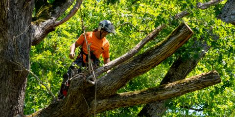 A Brief Introduction to Arborist Services, ,