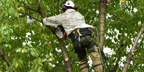 3 Common Signs of Tree Disease, ,