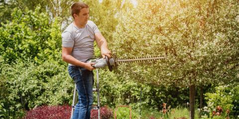 3 Benefits of Tree Pruning & Trimming, ,