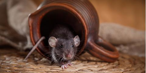 5 Telltale Signs of a Rodent Infestation, Newport, Ohio