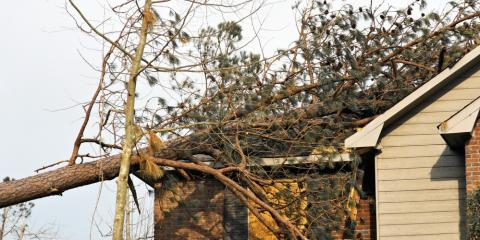 Tree Maintenance Experts Share 3 Tips for Dealing With Roof-Damaging Trees, Newport-Fort Thomas, Kentucky