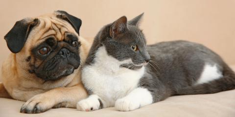 A Guide to Pet Safety During Pest Control Treatments, Newport, Ohio