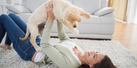 How to make your home pet friendly advice from your local vet waipahu - Make house pet friendly ...