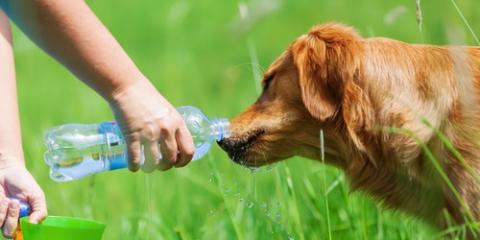 5 Pet Care Tips to Keep Your Dog Cool in the Summer, Newtown, Connecticut