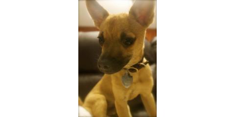 Immunize Your New Pet With Vaccinations At Waipahu Waikele Pet Hospital, Ewa, Hawaii
