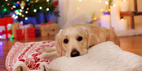 3 Benefits of Dog Boarding for the Holidays, Nicholasville, Kentucky