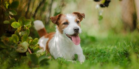 5 Essential Tips to Keep Your Dog Cool This Summer, Nicholasville, Kentucky