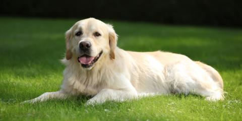Top 5 Allergies in Dogs, Nicholasville, Kentucky