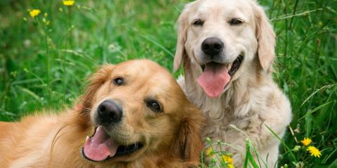 3 Benefits of Socializing Dogs, Nicholasville, Kentucky