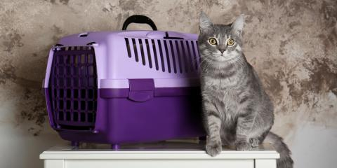 A Guide to Getting Your Cat Into Their Carrier, Nicholasville, Kentucky