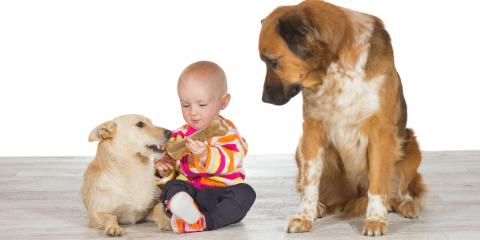 3 Signs Your Dog Is Jealous of Your New Pet or Child, Nicholasville, Kentucky