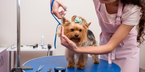 Benefits of Regular Pet Grooming, Nicholasville, Kentucky
