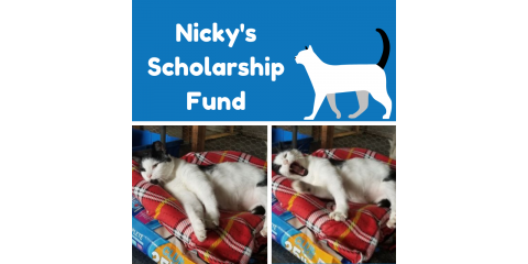 Nicky's Scholarship Fund: An Opportunity to Support Community Cats on Unprecedented Levels, Stratford, Connecticut