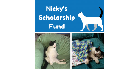 Nicky's Scholarship Fund: Where the Feral Cat Community Comes Together!, Stratford, Connecticut