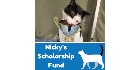 Nicky's Scholarship Fund: A Grant Established to Support Community Cats, Stratford, Connecticut