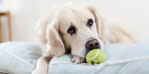 5 Types of Worms In Dogs + Treatment Options, Manhattan, New York