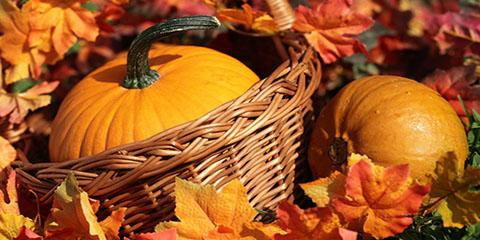 Event Planning Ideas for Your College's Fall Festivals, Franklin, New Jersey