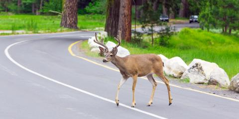 What to Do If You Collide With a Deer, Concord, North Carolina