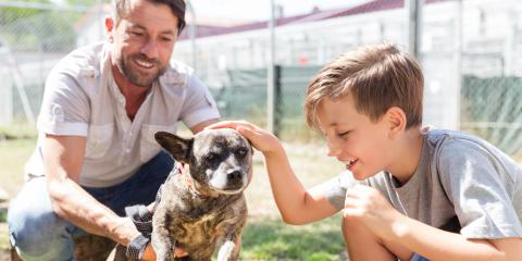 3 Tips for Introducing a Nervous Dog to New People, Sanford, North Carolina