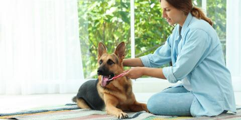 3 Tips for Maintaining Your Dog's Dental Health, Mineral Springs, North Carolina