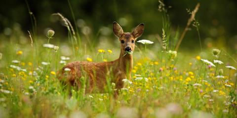 3 Tips to Avoid a Deer Collision on the Road, North Haven, Connecticut