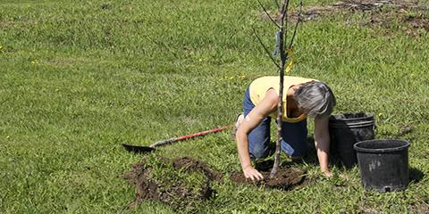 Arborists Share the Best Time for Tree Planting & Transplanting, North Huntingdon, Pennsylvania