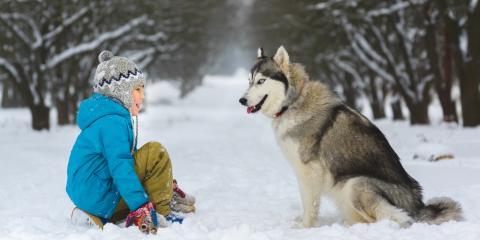 4 Reasons Board Your Dog in Winter, Fairbanks North Star, Alaska