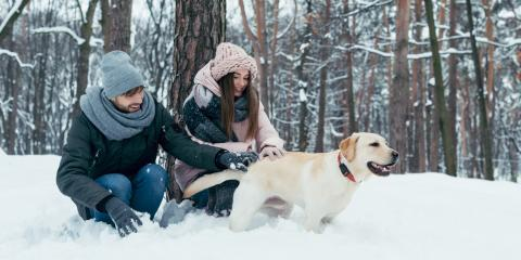 How to Help Your Dog Adapt to Weather in Alaska, Fairbanks North Star, Alaska