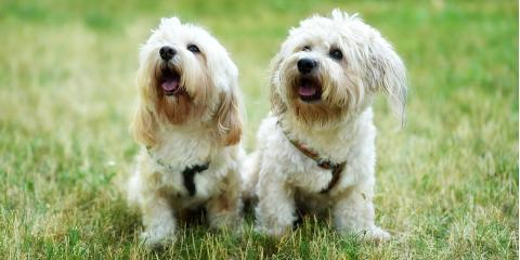 What Causes Discoloration in Dog Fur?, Fairbanks North Star, Alaska