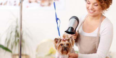3 Trending Dog Grooming Styles, Fairbanks North Star, Alaska