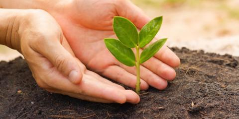 3 Benefits of Organic Fertilizer for Better Lawn Care, North Ridgeville, Ohio