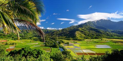 3 Reasons Why Hawaii Grows the World's Best Macadamia Nuts, Waialua, Hawaii