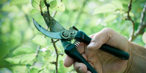 Local Tree Specialists Share the Top Benefits of Tree Pruning, North Huntingdon, Pennsylvania