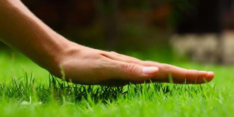 5 Common Grasses for Lawns, Sagamore Hills, Ohio