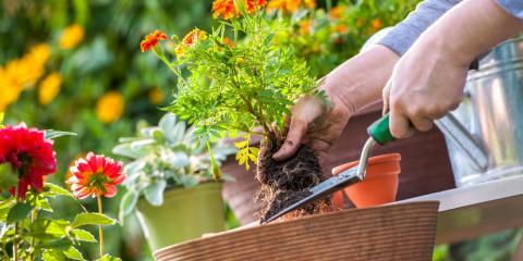 3 Ways to Prepare Your Garden for Spring Blooms, Colerain, Ohio