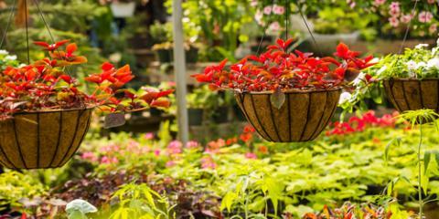 How to Choose & Plant Hanging Flowers, Colerain, Ohio
