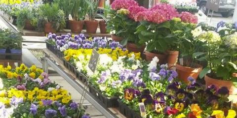 Customer Appreciation Week Sale Starts June 15th, 2017, Colerain, Ohio