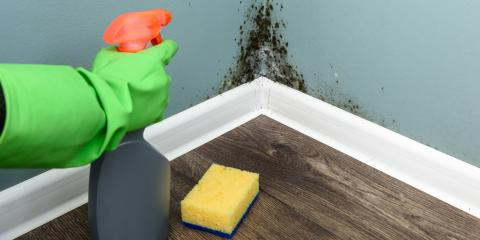 3 Signs Your Home Has Black Mold, Whitefish, Montana