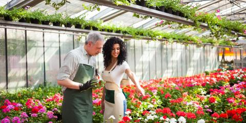 4 Questions to Ask When Purchasing a New Plant, Koolaupoko, Hawaii