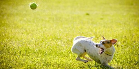 3 Benefits of Daily Doggie Exercise From a Leading Dog Boarding Service, Manhattan, New York