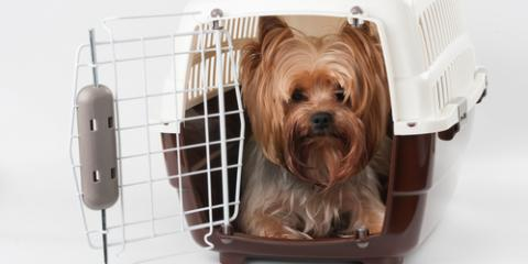 Churchville Dog Sitter Shares 3 Tips for Crate Training Your Dog, Churchville, New York